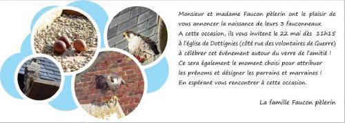 Naissance fauconneaux 2